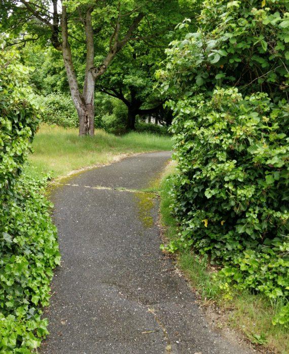 A bike path in the woods